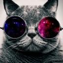 Gözlüklü Kedi 1