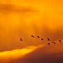 Günbatımı ve Kuşlar
