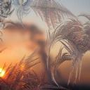 Günbatımı Yapraklar