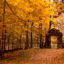 Güzel Ağaç Manzarası 2