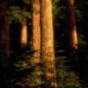 Güzel Ağaçlar 3