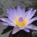 Güzel Mor Çiçek