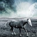 Hayal Dünyası At