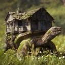 Kaplumbağa 1