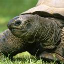 Kaplumbağa 2