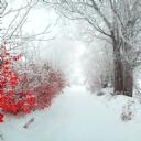 Kar Manzarası 7