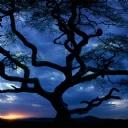 Karanlık Bulutlar ve Ağaçlar