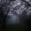 Karanlık Orman