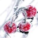 Karlı meyve