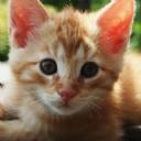 Kedi 2