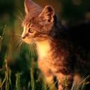 Kedi 3