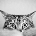 Kedi Göz