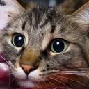Kedi ve Gözleri