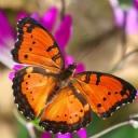 Kelebek 3