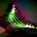 Kelebek 4