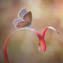 Kelebekler  11