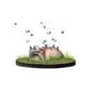 Kelebekler   12