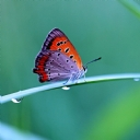 Kelebekler 3