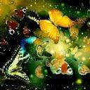 Kelebekler 4