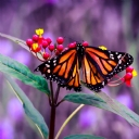Kelebekler 5