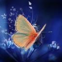 Kelebekler 8