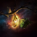 Kelebekler 9