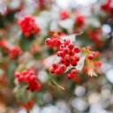 Kırmızı Çiçek 1