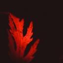 Kırmızı Yaprak 1