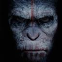 Kızgın Maymun