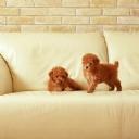 Koltuktaki Köpekler