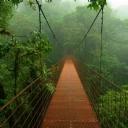 Köprü 2