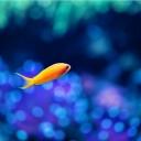 Küçük Balık