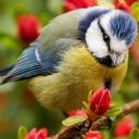 kuş ve çiçek