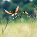 Kuşlar 3