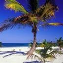 Maldivler ve Ağaçlar