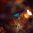 Mavi Çiçek 2