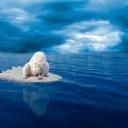 Mavi Deniz Kutup Ayısı