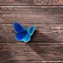 Mavi Kelebek 2