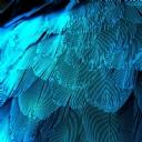 Mavi Tüy