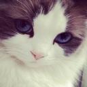 Mavi� Kedi