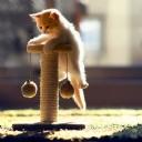 Minik Kedi 1
