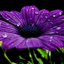 Mor Çiçek 3