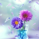 Mor Çiçek 6