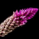 Mor Çiçekler 5