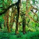 Muhteşem Ağaçlar 2