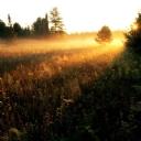 Orman ve Güneş Yansıması