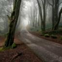 Orman Yürüme Yolu