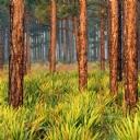 Ormanlık Alan