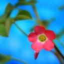 Pembe Çiçek 1