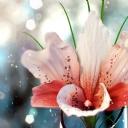 Pembe Çiçek 2